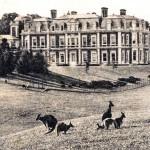 Tring Park kangaroos 1907
